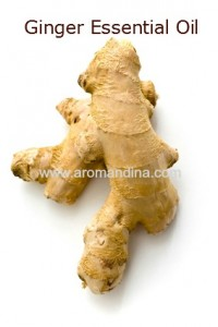 Ginger essential oil copy
